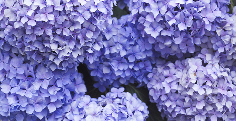 Meaning Of The Color Purple
